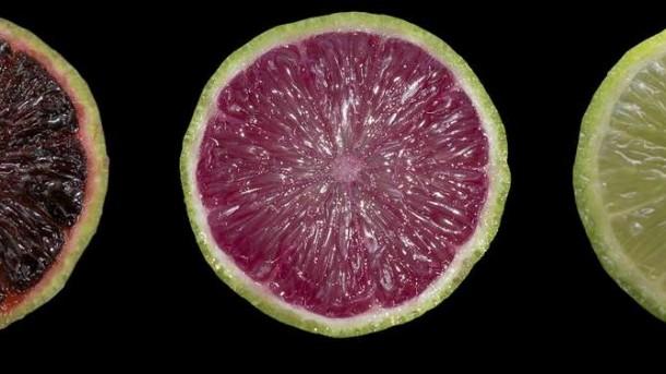 lime viola